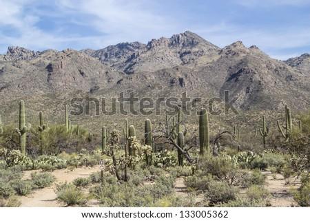 Desert Mountain Landscape in Tucson Arizona - stock photo