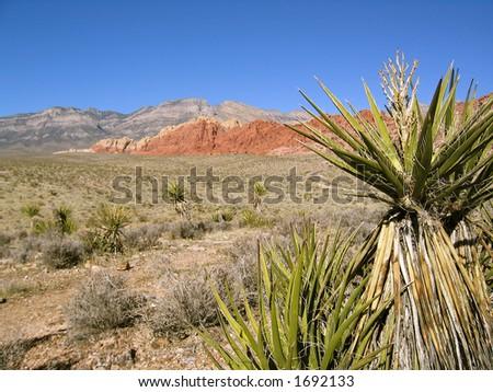 Desert on the outskirts of Las Vegas - stock photo