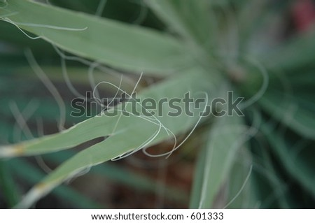 desert plant - stock photo