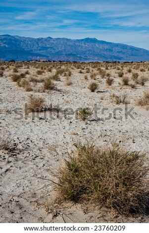 Desert Plants in Death Valley - stock photo