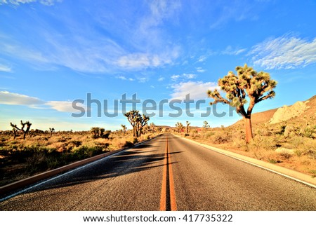 Desert Road with Joshua Trees in the Joshua Tree National Park, USA