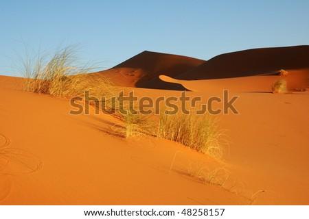 Desert Sahara dune behind the bushes - stock photo