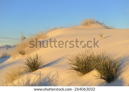 Desert Sand Dune in Early Morning Light - stock photo