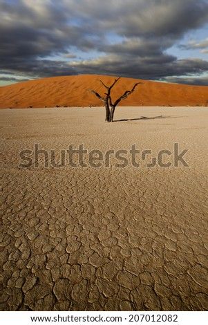 desert scene with dead tree and clouds and parched earth - stock photo