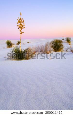 desert sunrise - stock photo