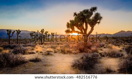 Desert sunset in the Mojave Desert at Joshua Tree National Park, California