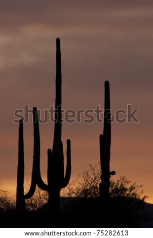 Desert Sunset in Tucson Arizona