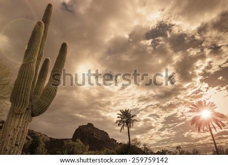 Desert vista landscape, saguaro tree, mountain background. - stock photo