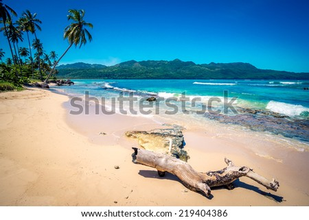 Deserted trunk on Playa Rincon beach in Dominican Republic - stock photo