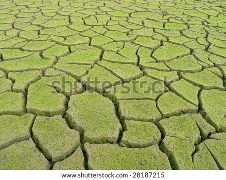Desertification - stock photo