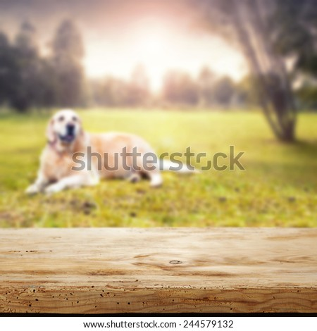 desk of wood in park and summer or spring day in park of trees and one dog  - stock photo