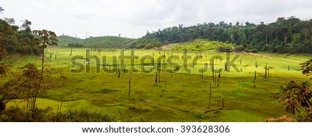 Destroyed tropical rainforest in Amazon, Brazil. - stock photo