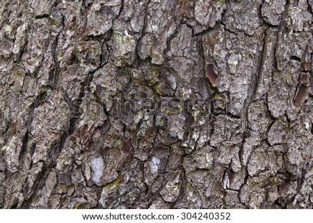 Detail, conifer bark,  coastal forest,  Oregon Coast - stock photo