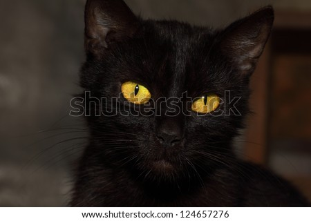 detail head black cat with yellow eyes - stock photo