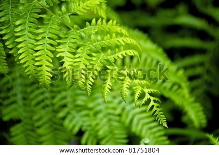 Detail of a beautiful leaf of Fern. - stock photo