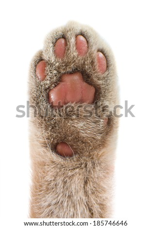 Detail of a cat paw, vertical photo isolated on a white background. - stock photo