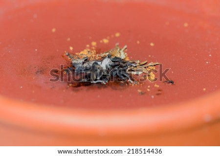 "Detail of a dried smoked ""White Sage"" and ""Palo Santo"" during a cleansing ceremony. - stock photo"
