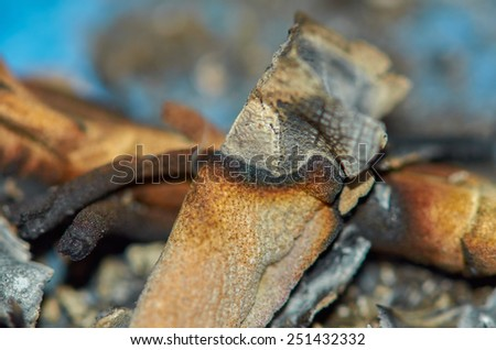 "Detail of a dried smoked ""White Sage"" during a cleansing ceremony.  - stock photo"