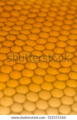 Detail of a empty honeycomb in bright sunlight. - stock photo
