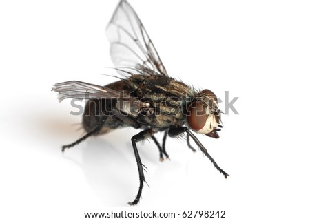detail of a fly isolated on white background - stock photo