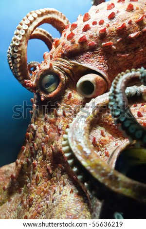 Detail of a Giant Octopus - stock photo