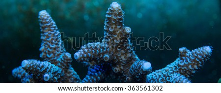 Detail of a high quality coral family of acroporas, macro photographed to see all the details of its structure and polyps - stock photo