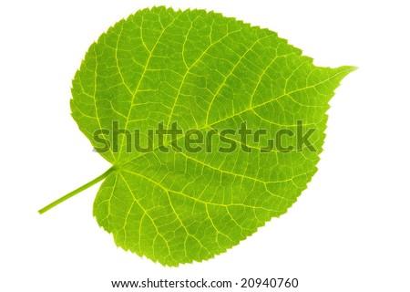 Plant Blade