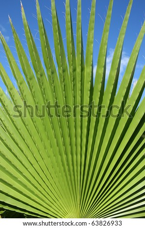 detail of a palm leaf with a clear blue sky in the background