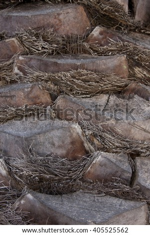 Detail of a palm tree's trunk, Cape Town, Western Cape, South Africa - stock photo