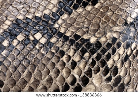 Detail of a real skin of a snake with scales pattern - stock photo