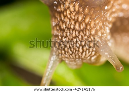 detail of a snail in nature. super macro - stock photo