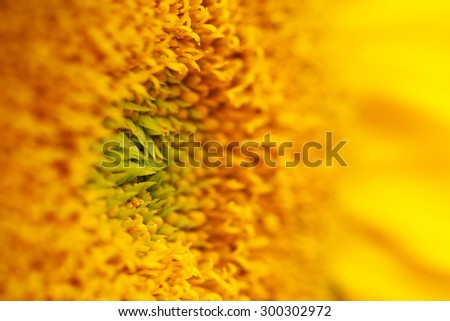 Detail of a sunflower, shallow depth of field.