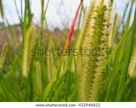 Detail of blooming stem. Stalks of green grass. Little petals. Blue sky. Cloudy day. Late summer. Fresh colors. - stock photo