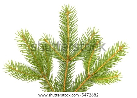 Detail of christmas tree branches on white background