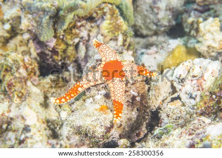 Detail of colorful sea star in coral reef. - stock photo
