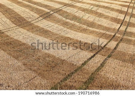 detail of dry harvested agriculture field  - stock photo