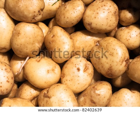 Detail of fresh garden potatoes - stock photo
