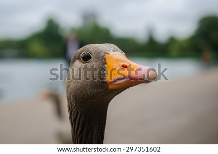 Detail of goose - stock photo