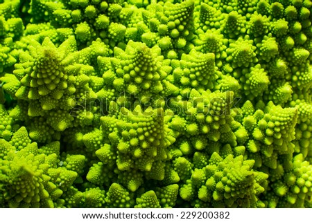 detail of green fractal cauliflower - stock photo