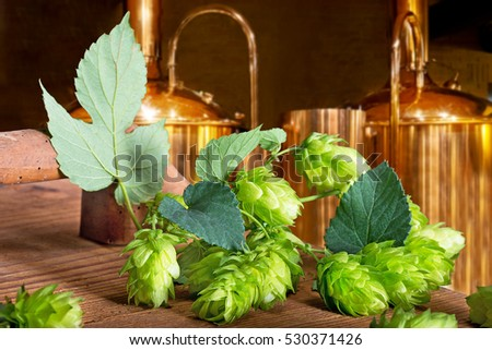 Detail of hop cones  in the brewery