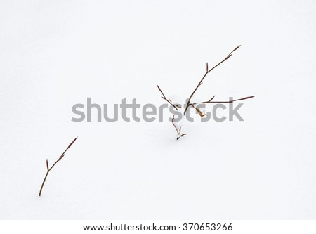 detail of leave in winter isolated on snow