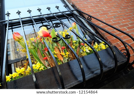 Detail of metal grate and window box with red and yellow flowers in Back Bay, Boston - stock photo