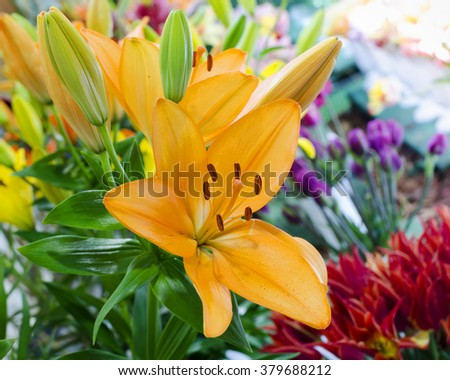 Detail of orange lily flower with buds in a market or flower shop