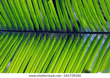 detail of palm leaf on nature - stock photo