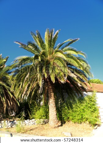 detail of palm with blue sky - summer time