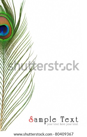 Detail of peacock feather eye on white background - stock photo