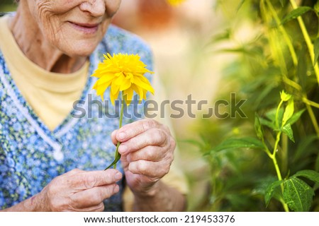 Detail of senior woman in apron with yellow flower in the sunny garden - stock photo