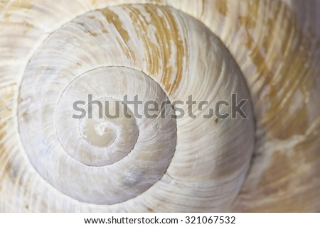 Detail of shell spiral