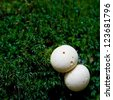 Detail of small mushrooms in the forest. - stock photo