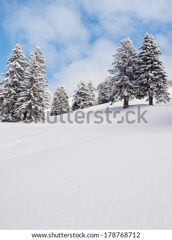 detail of snow covered trees in a wooded winter landscape with blue skies